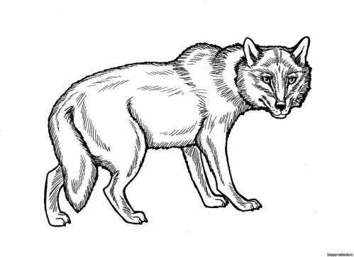 По мере правильных решений волк и заяц