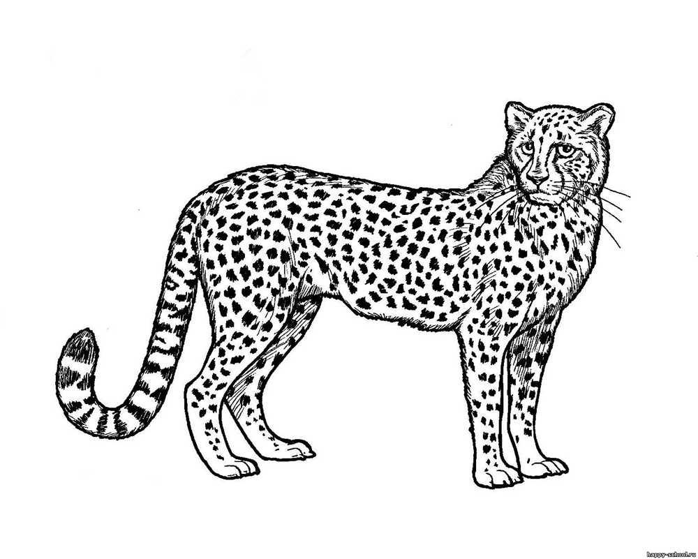 Добрый гепард