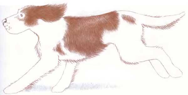 Пишите в комментарии все.  Научиться рисовать собаку такую можно действительно за 15 минут.  Нужно только желание.
