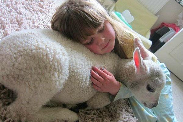 О сострадании к животным - Мудрые слова - Для души - Статьи …